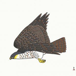 2019 Peregrine Falcon